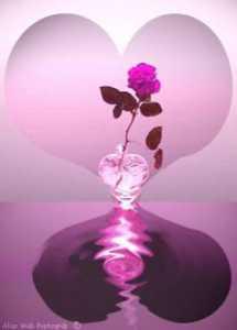 illustration L'amour et l'amitier