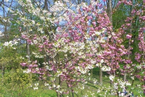 illustration c'est le printemps !!!